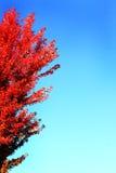 Autumn Flyer Background