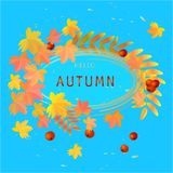 Autumn flyer with maple, rowan foliage on blue background. Editable layout with Autumn  maple, rowan foliage on blue background. Vector illustration Royalty Free Stock Photo