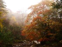 Autumn fog of forest stock photos