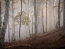 Autumn fog forest. Autumn beautiful forest and fog Stock Image