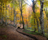 Autumn fog forest Stock Photo