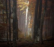 Autumn fog forest. Autumn beautiful forest and fog Stock Photography