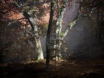 Autumn fog forest Stock Photos