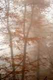 Autumn fog in the forest. Dark themed picture in late november at the woods Stock Images