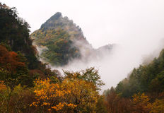 Autumn Fog Forest, Gansu Province, China Royalty Free Stock Images