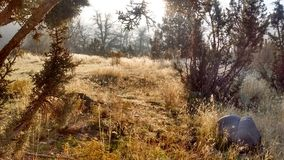 Autumn fog High Desert frosty morning royalty free stock photography