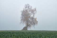 Autumn fog in Lithuania. stock photography
