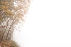 Autumn fog Stock Photography