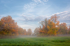 Autumn fog in the mixed forest Royalty Free Stock Image