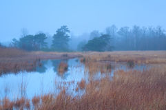 Autumn fog over swamp Stock Images
