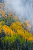 Autumn Fog & Snow Stock Photo