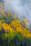 Autumn Fog u. Schnee Stockfoto