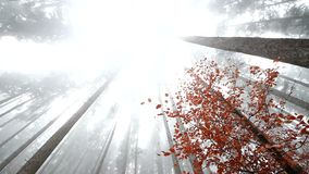 Autumn fog in the wood. Autumn mist in the wild forest, Full HD stock video