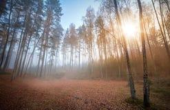 Autumn foggy ащкуые with rising sun Royalty Free Stock Photos