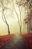 Autumn foggy alley  - beautiful autumn landscape Royalty Free Stock Images