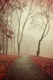 Autumn foggy alley  - beautiful autumn landscape Royalty Free Stock Photography