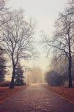 Autumn foggy alley  - beautiful autumn landscape Royalty Free Stock Image