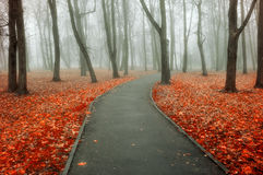 Autumn foggy alley - colorful autumn foggy landscape view Stock Photo