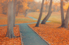 Autumn foggy alley - colorful autumn landscape view Stock Photos