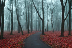 Autumn foggy alley  - mysterious autumn landscape Royalty Free Stock Image