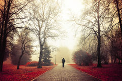 Autumn foggy alley - mysterious autumn landscape. Autumn nature -foggy autumn park. Autumn alley in dense fog with lone passerby- foggy autumn landscape with Royalty Free Stock Photography