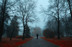 Autumn foggy alley - mysterious autumn landscape. Autumn nature -foggy autumn view. Autumn alley in dense fog with lone passerby- foggy autumn landscape with Stock Photo