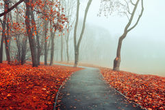 Autumn foggy alley - park autumn landscape. Autumn park alley in dense fog Royalty Free Stock Photos