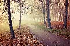 Autumn foggy alley - park autumn landscape in the fog Stock Photo