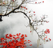 Autumn foggy day in  mountains Stock Photo