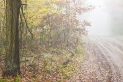 Autumn foggy day - Poland. Royalty Free Stock Images