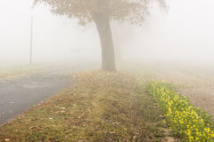 Autumn foggy day - Poland. Stock Images