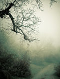 Autumn foggy forest. Dark branches of autumn or winter tree in foggy forest landscape. Poster, card, place for text Stock Photography