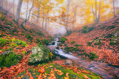 Autumn foggy forest stream in the mountain canyon stock image