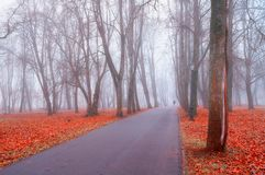 Autumn foggy landscape. Autumn park alley with bare trees and dry fallen orange leaves. Covering the ground. Autumn landscape scene - lonely autumn park alley Stock Images