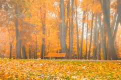 Autumn foggy landscape. Bench under the orange autumn trees. In the colorful autumn park Stock Photo