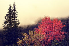 Autumn foggy landscape in Carpathians Mountains Royalty Free Stock Images