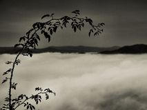 Autumn foggy landscape, dog rose branch, morning after rainy night. Stock Image