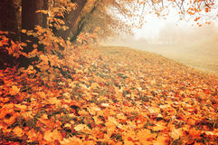 Autumn foggy landscape - Park with fallen leaves on the foregrpund Stock Images