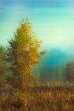 Autumn foggy morning Stock Photos