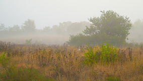 Autumn foggy morning in the countryside stock video footage