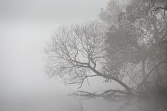 Autumn foggy morning. Dawn on the misty river Stock Photos