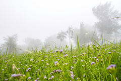 Autumn foggy morning landscape and meadow on the mountains Royalty Free Stock Photos