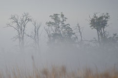 Autumn and a Foggy Morning in the Marsh Stock Photography