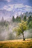 Autumn foggy mountain scene. Fall rain and mist Stock Image