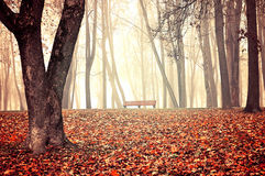 Autumn foggy park - beautiful autumn landscape. Autumn park in dense fog - lonely bench under the bare trees among the fallen red leaves. Vintage tones Stock Image