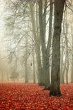Autumn foggy park - vibrant autumn landscape Stock Photos