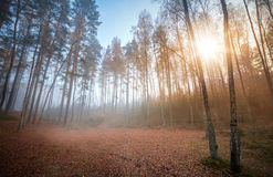 Autumn foggy ащкуые with rising sun Royalty Free Stock Photos