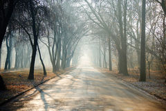 Autumn foggy road in the park Royalty Free Stock Images