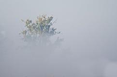 Autumn on a Foggy Silent Morning in the Marsh Stock Photos