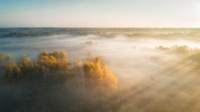 Autumn foggy silhouette forest and sunrise with sunbeam, photo shoot by drone. Autumn foggy silhouette forest and sunrise with sunbeam, photo shoot by drone royalty free stock image